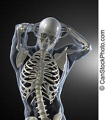 balayage corps, monde médical, humain, vue frontale
