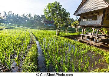 balcón de arroz