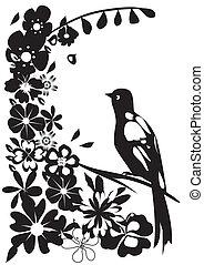 Balck Bird