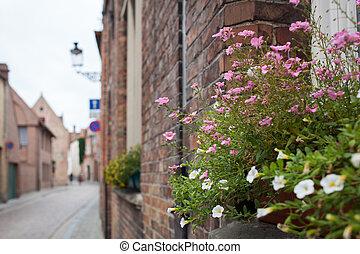 balcone, con, fiori