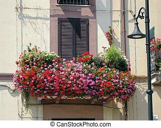 Balcony drowned in flowers!