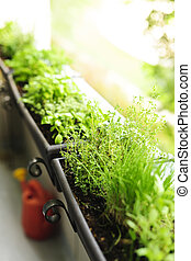 Balcony herb garden - Fresh herbs growing in window boxes on...