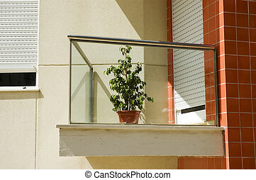 Solitary plant in a balcony