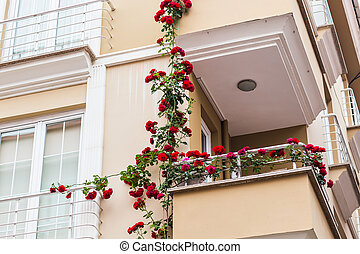 balcony with roses