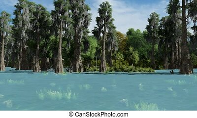 Bald cypresses in the swamp in Texas