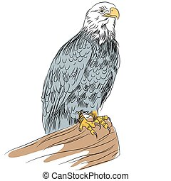 Bald Eage Sketch - An image of a bald eagle.