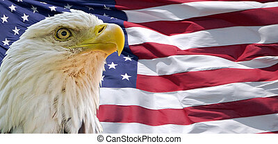 portrait of a bald eagle in front of the flag of the USA