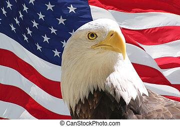 Bald Eagle and American Flag - Closeup of bald eagle with...