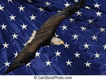 Bald Eagle and Stars