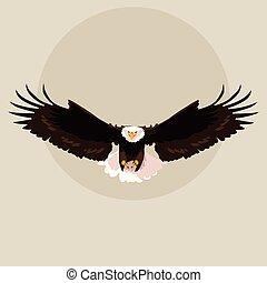bald eagle bird flying
