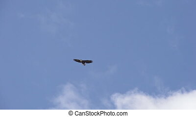 Solitary bald eagle soaring in the cloudy blue sky in a big lazy circle. Slow motion.