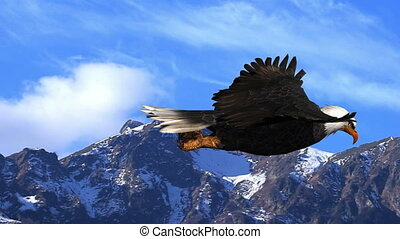 Bald Eagle Flies in the Mountains Animation - Animation of a...