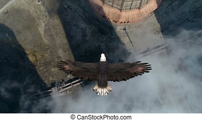 Bald Eagle Flies Over the Cooling Tower Animation - ...