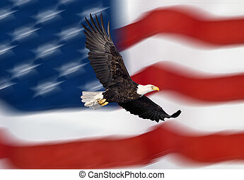 Bald eagle flying in front of flag