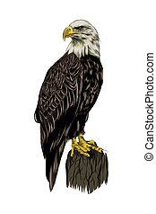 Bald eagle from a splash of watercolor, colored drawing, realistic