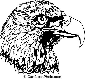 Bald Eagle Head Illustration - An illustration of an...