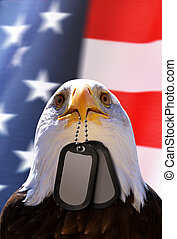 Bald Eagle holds a dog tags in his beak, at the background American flag.