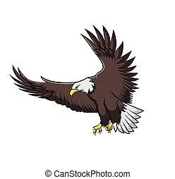 Eagle isolated on white