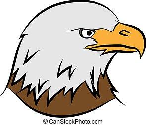 Bald eagle on white