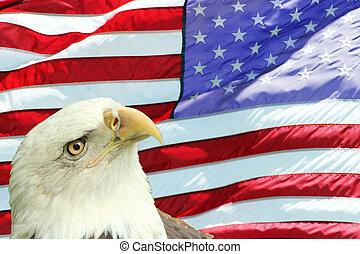 Bald Eagle Set Against American Flag