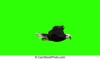 Bald Eagle Side View on a Green Screen - Animation of a ...