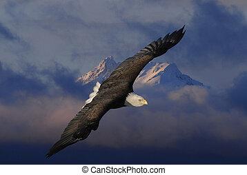 Bald Eagle soaring over mountains