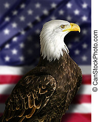 Bald Eagle with Flag