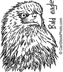 bald eagle's head - vector illustration sketch hand drawn with black lines, isolated on white background