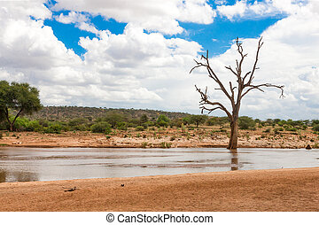 Bald trees on the bank of a river