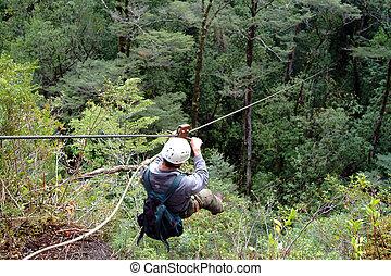 baldacchino, meridionale, foreste