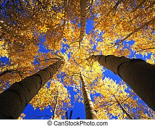 baldakijn, bos, gele