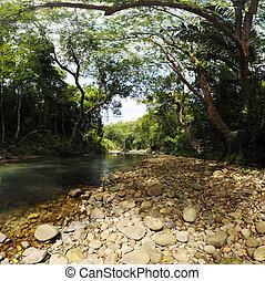 baldakin, av, träd, täcke, a, ström, in, a, djungel