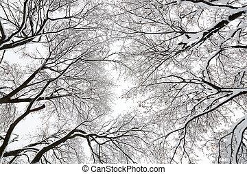 baldaquin, arbre, neiger orage
