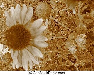 Balding Flower 2