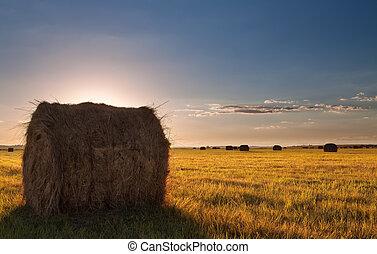 Bale field landscape