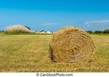 Bale hay in agriculture landscape