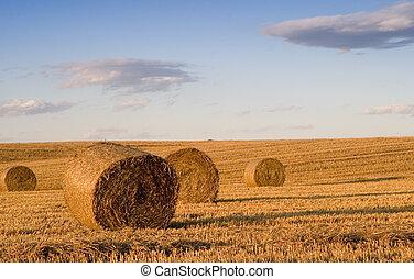 Bale in landscape