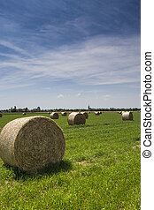 Bale of hay in a cultivated field