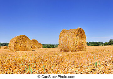 bale of hay in a field