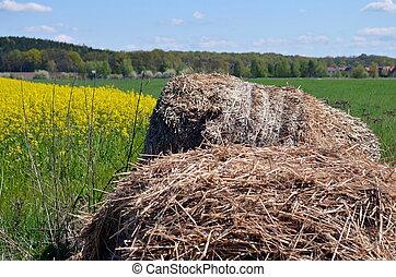 bale of hay lying near a rapeseed field