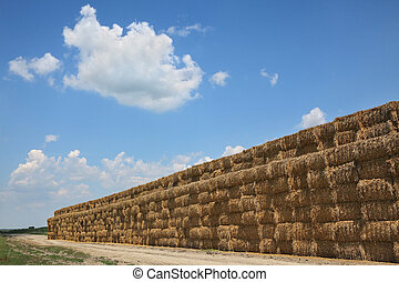 Bale of packed straw in field after harvest