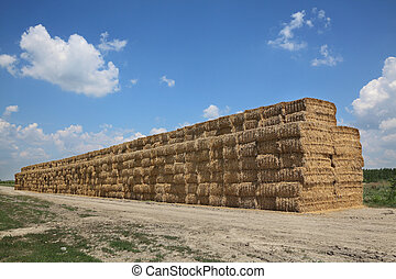 Bale of packed straw in wheat field after harvest