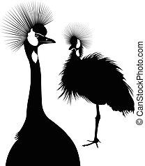 Balearica regulorum. Vector silhouette of standing Crowned Crane. The Cranes. birds The Cranes