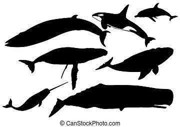 baleias, cobrança