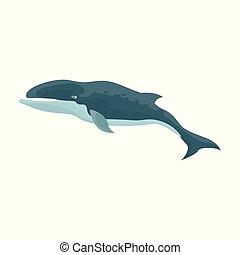 baleine bosse, icon., fond, isolé, icône, vecteur, dessin animé, blanc