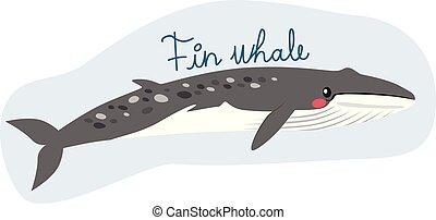 baleine, nageoire