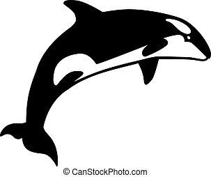 baleine, sauter, orque