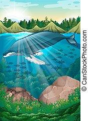 baleine, sous, scène, mer, nature