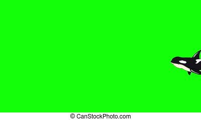 baleine, tueur, sous-marin, isolé, écran, vert