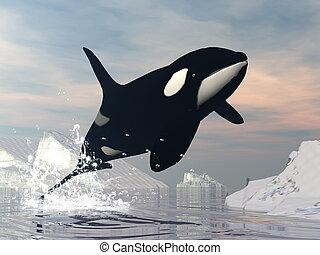 balena assassino, salto, -, 3d, render